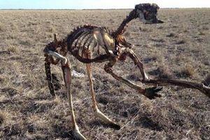 Sự thật rùng mình về Úc sau bức ảnh kangaroo chết trơ xương