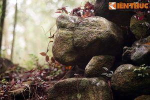 Tận mục tòa thành đá cổ bí ẩn giữa rừng rậm Quảng Ngãi