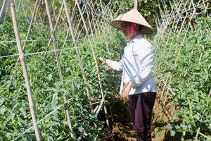 Điện Biên: Thử nghiệm vận hành thông tin Khí hậu nông nghiệp