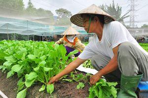 Nhọc nhằn 'làng rau xanh' ở Hóc Môn