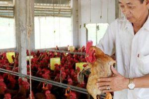 Làm giàu ở nông thôn: Ông Điền không... 'điên'