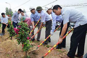 Lãng phí từ cuộc phát động trồng 1 triệu cây hoa giấy tại Uông Bí