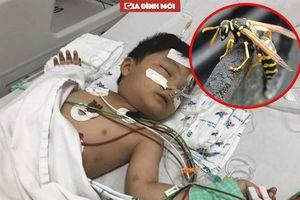 Bị ong vò vẽ đốt có thể tử vong sau 10 phút vì sao?