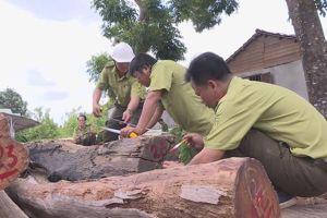Vụ bắt trùm gỗ Phượng 'Râu': Mở rộng điều tra, hàng loạt cán bộ liên đới