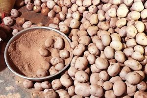 Lật tẩy mánh khóe của chủ cơ sở nông sản 'phù phép' khoai Tây Trung Quốc thành khoai tây Đà Lạt