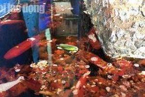 Hãi hùng cơ sở sản xuất muối ớt có lẫn côn trùng ở Sài Gòn