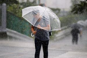 Giao thông Nhật Bản tê liệt do ảnh hưởng của bão Cimaron