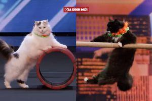 Đàn mèo đi thi gây 'náo loạn' Tìm kiếm Tài năng Mỹ, khán giả đứng dậy cổ vũ nhiệt tình