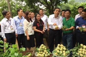 Người trồng na Chi Lăng chưa vui vì na VietGAP vẫn bán trôi nổi