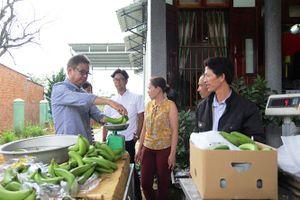 Sáng lên hy vọng mô hình trồng chuối Laba xuất khẩu