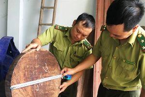 Lùm xùm vụ tạm giữ gần 800 thớt gỗ nghiến, kẽ hở pháp luật hay tiếp tay?