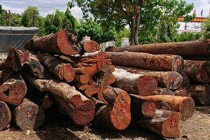 Khởi tố thêm lãnh đạo kiểm lâm tiếp tay trùm gỗ lậu Phượng 'râu'