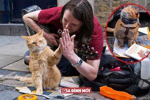 Chú mèo hoang bất ngờ đem gia tài kếch xù tới trả ơn ân nhân cứu mạng của mình