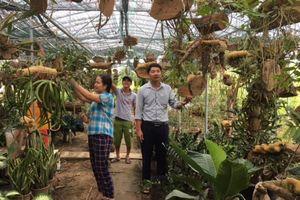 Nghi Liên: Giàu có nhờ phong trào làm vườn