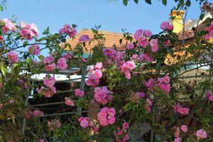 Vẻ đẹp của tường rào Đà Lạt