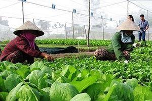 Nông nghiệp hữu cơ quy mô sản xuất vẫn nhỏ lẻ