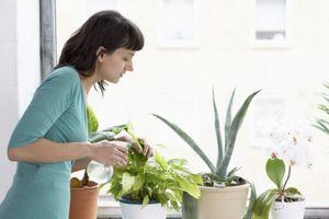 11 loại cây cảnh giúp thanh lọc không khí trong nhà cực tốt