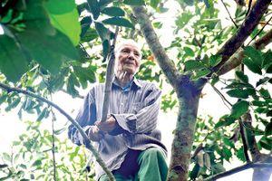 Nơi người 90 tuổi vẫn cuốc đất, trèo cây