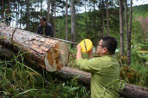 Ngang nhiên phá rừng giữa khu dân cư