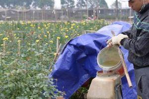Thuốc trừ cỏ sinh học có thay thế được thuốc trừ cỏ hóa học?