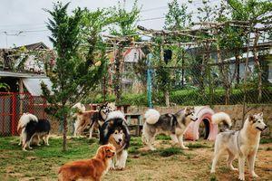 'Ngôi nhà nhỏ' toàn chó cảnh của cặp đôi 9X trên cao nguyên Đà Lạt
