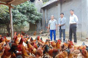 Thái Nguyên: Hội viên nông dân đóng góp gần 200 tỷ đồng xây dựng NTM