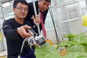 Hội NDVN - Hàn Quốc: Hợp tác về nông nghiệp công nghệ cao