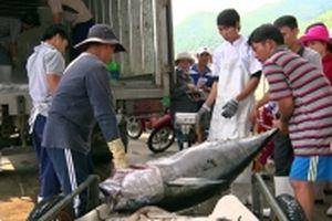 Hiệu quả mô hình chuỗi liên kết nghề cá