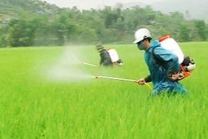 Quản lý việc kinh doanh, sử dụng thuốc trừ cỏ