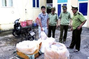 Quảng Ninh nỗ lực ngăn chặn nguy cơ xâm nhiễm bệnh dịch tả lợn châu Phi