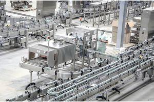 Sữa Việt mở rộng thị trường toàn cầu
