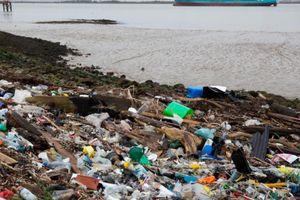 Phát hiện nấm ăn nhựa, lối thoát cho môi trường toàn cầu