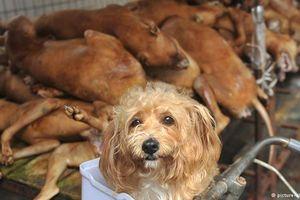 Hà Nội khuyến khích không ăn thịt chó, mèo: Nhiệt liệt ủng hộ chủ trương văn minh