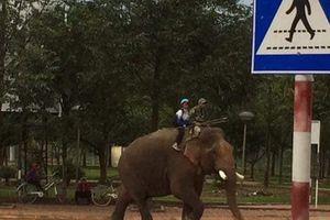 Xuất hiện ông bố đưa con đi học bằng voi