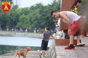 Hà Nội: Báo động tình trạng chó thả rông bất chấp nhiều tai nạn chết người