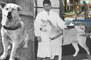 Những chú chó trung thành nhất thế giới mà con người phải rơi nước mắt tiếc thương