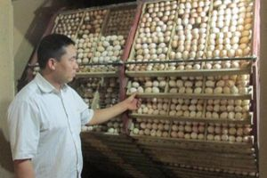 Chuyện hiếm: Chỉ một thôn thu 16 tỷ đồng từ nuôi gà sinh sản