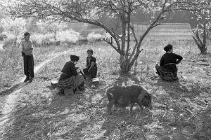 Triển lãm ảnh 'Thư Đồng Văn' của nhà nhiếp ảnh, nhà quay phim gạo cội Nguyễn Hữu Tuấn