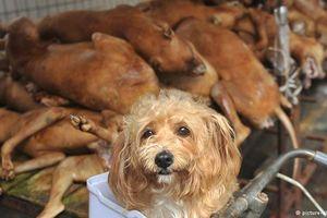 Hà Nội muốn cấm bán thịt chó ở nội thành từ 2021