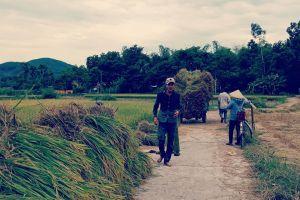 Quảng Nam: Cánh đồng 'chết' bên hồ lớn nhất nhì miền Trung