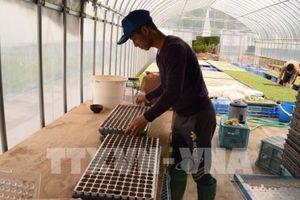 Nhiều giải pháp hoàn thành kế hoạch đào tạo nghề nông nghiệp