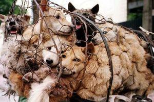 Những tiềm ẩn khôn lường cho sức khỏe khi ăn thịt chó