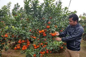 Lĩnh Nam giàu có nhờ chuyển đổi cây trồng