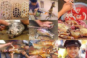 Loạt ảnh cực sốc về thịt chó Việt khiến Tây 'rụng rời'