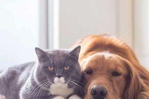 Hạ viện Mỹ thông qua luật cấm giết mổ chó mèo lấy thịt