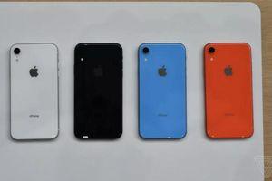 Ảnh thực tế iPhone Xr hai sim, nhiều màu, giá từ 749 USD