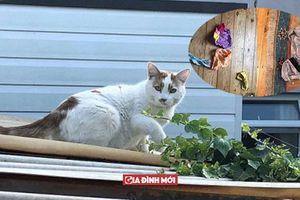 Siêu trộm mèo chuyên rình mò lấy trộm đồ lót nhà hàng xóm về tặng chủ