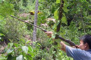 Tuần tra bảo vệ rừng, cán bộ kiểm lâm bị bắn trọng thương
