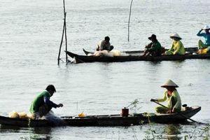 An Giang: Nước tràn đồng, bắt 30 ký cá linh/ngày vẫn không có lời