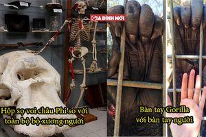 19 thứ có chiều hướng lớn hơn suy nghĩ của con người, bàn tay Gorilla thật đáng sợ